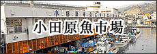 小田原魚市場
